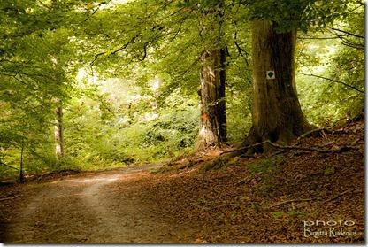 naturen_20120908_skog