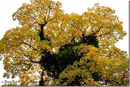nature_20121023_treekilling