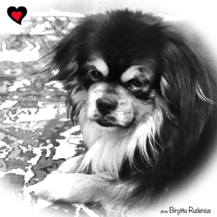 Milton - My Tibbie