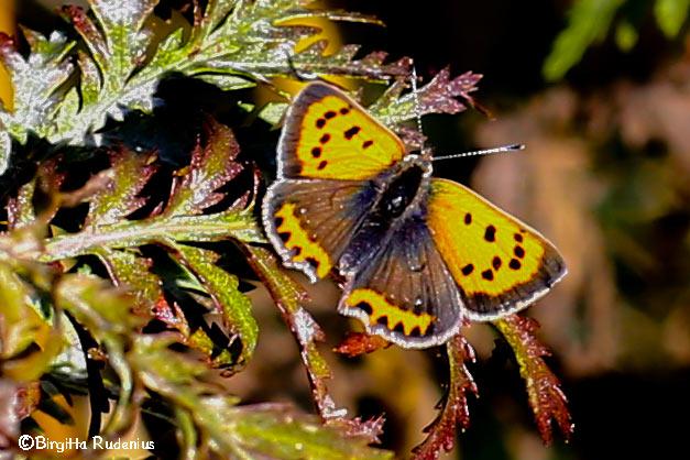 macro_20130919_butterfly