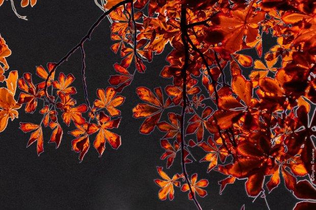 pm_20130922_leaf