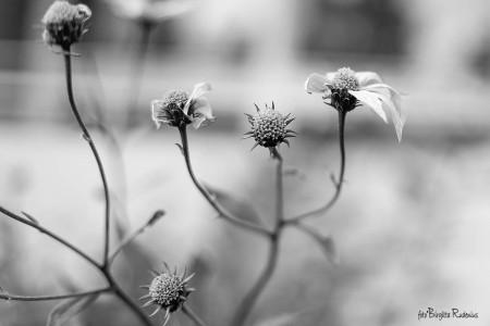 bw_20150925_flowers