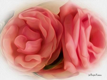 Rosor från Tanjan