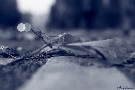 Blue Fallen Leaves