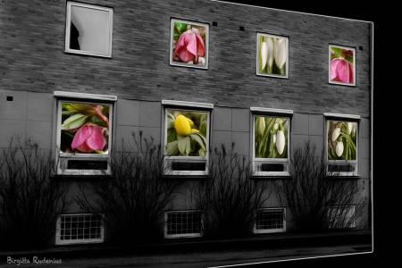 PhotoMania - House of Flowers
