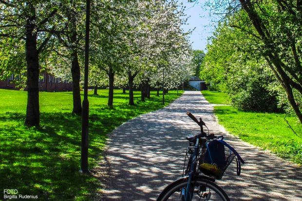 bike_20160509_tour