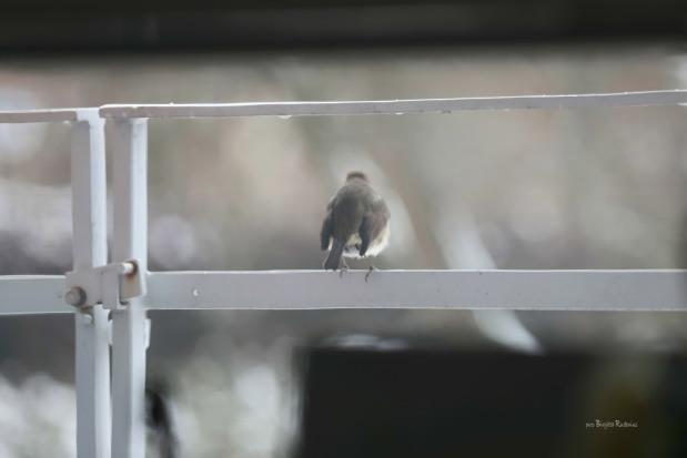 Bird Photo © Birgitta Rudenius